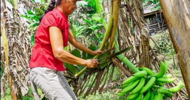 Reglamentan actividades en zonas agrícolas, pecuarias y de producción sostenible en Villavicencio