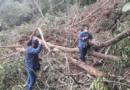 Cuadrilla de tala y poda atendió 55 emergencias en la ciudad durante los primeros quince días de abril