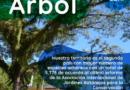 Se intensifican acciones de mantenimiento y poda de plantas en Villavicencio durante el día del árbol