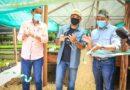Cormacarena pone en marcha mega vivero en Puerto López que produce 500.000 árboles anuales