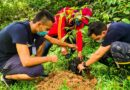 Cormacarena le apuesta a sembrar un millón 250 mil árboles este año